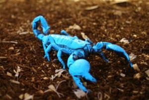 Син скорпион