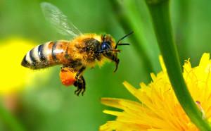 Едно българско изобретение може да спаси пчелите