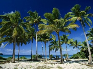 Палмов сироп помага за отслабване и подмладяване