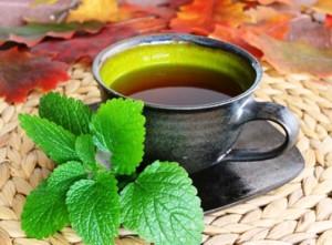 Билки полезни за лечение на неврастения – чай от маточина