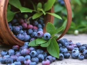 По ползи за здравето замразените боровинки не отстъпват на пресните