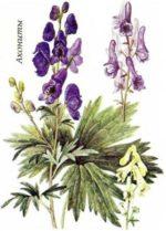 инфлуцид съдържа хомеопатични лекарства, хомеопатия