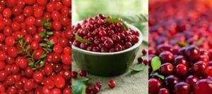 Американската червена боровинка е лек за много болести и е силен антиоксидант