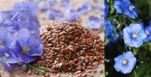 Чудодейното ленено семе – лек за артрит и други болести