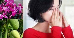 Синузит – домашно лечение с народни рецепти, билки и лекарства