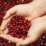 При лечение на цистит се препоръчват плодове и зеленчуци в диетата, а червената боровинка е универсален лек за него