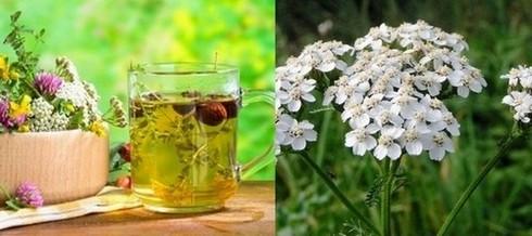Чудодейният бял равнец – лек за високо кръвно, възпаление на яйчниците и много други болести