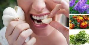 Препоръчани и изпитани народни рецепти за зъбобол
