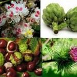 С билки и народна медицина срещу високите нива на пикочна киселина в кръвта и урината