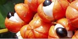 Гуарана – билка полезна и за отслабване.