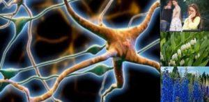 Множествена склероза – диета, лечение и народна медицина.