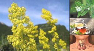 Еньовче – чудодейна билка, полезна за много болести и рак