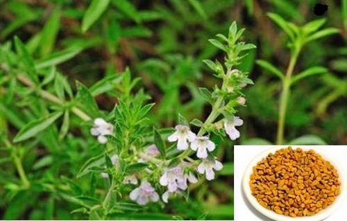 Сминдух – едно невероятно полезно растение.