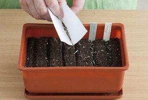 Билката турта се размножава чрез семена.