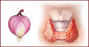 Кромид лук за щитовидна жлеза