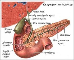 Секреция на жлъчка
