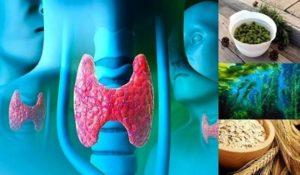 Симптоми на болна щитовидна жлеза, изследвания, диета и билкови рецепти в помощ при лечението