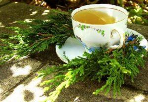 Чай от хвойна