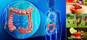 Колит – рецепти и билки за лечение на мъчителната болест, симптоми и видове