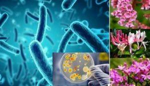 Ешерихия коли са вид пръчковидни бактерии, които принадлежат към видовете факултативни анаероби.