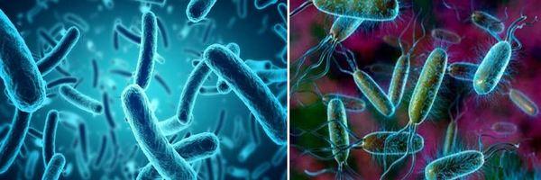 Бактериите Ешерихия коли се намират в червата на човека