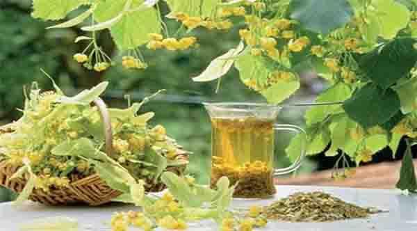 Лек за кашлица с липа