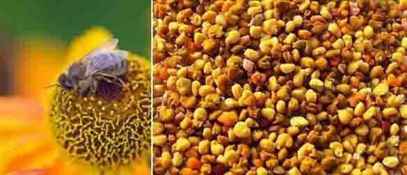 Работливите пчелички ни предлагат многобройни подаръци, сред които е и тяхната храна – пчелен прашец