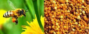Пчелен прашец - уникален природен продукт, който няма аналог