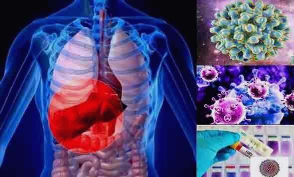 Инфекцията на черния дроб от вируса на хепатит Б се лекува трудно.