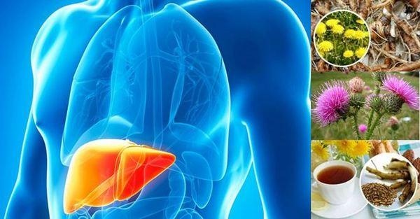Хепатит - лечение с билки и диета, народни рецепти