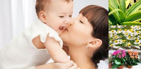 За лечението на атопичен дерматит при деца и бебета могат да помогнат билки и диета