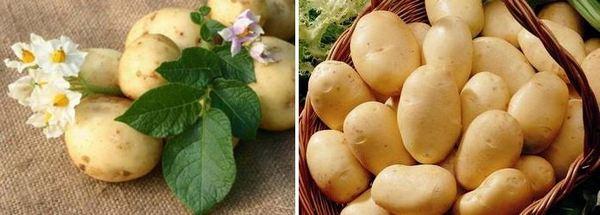 Картофено нишесте за атопичен дерматит