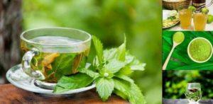 Прословутият зелен чай ни дарява с много полезни вещества, помага за забавяне на стареенето и пиенето му е най-лесният начин за сваляне на килограми